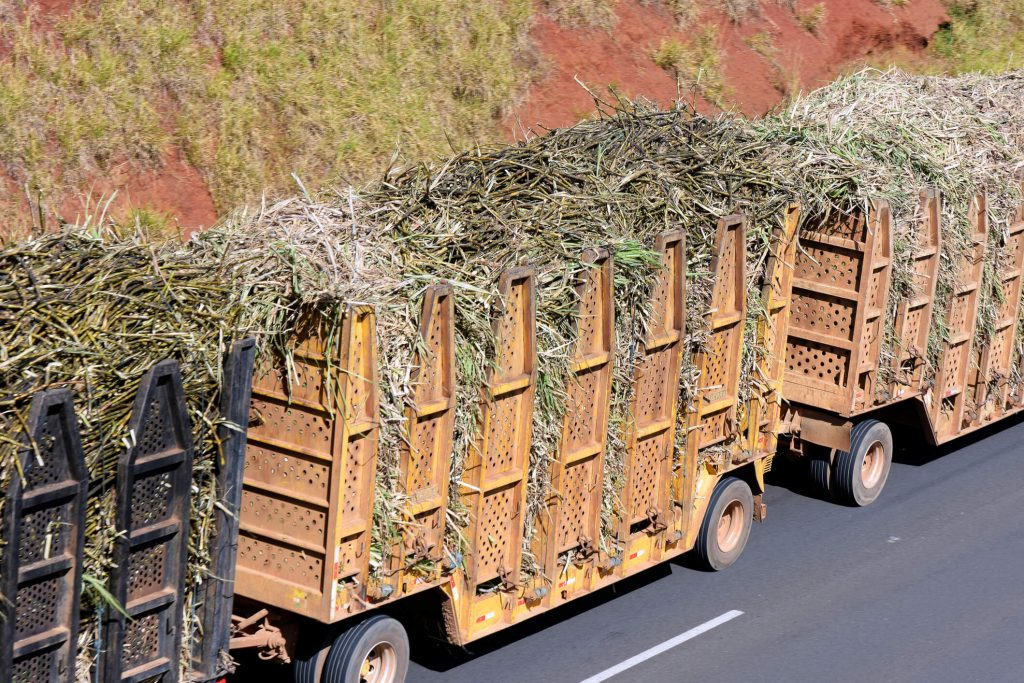 woody-biomass-aviation-fuel