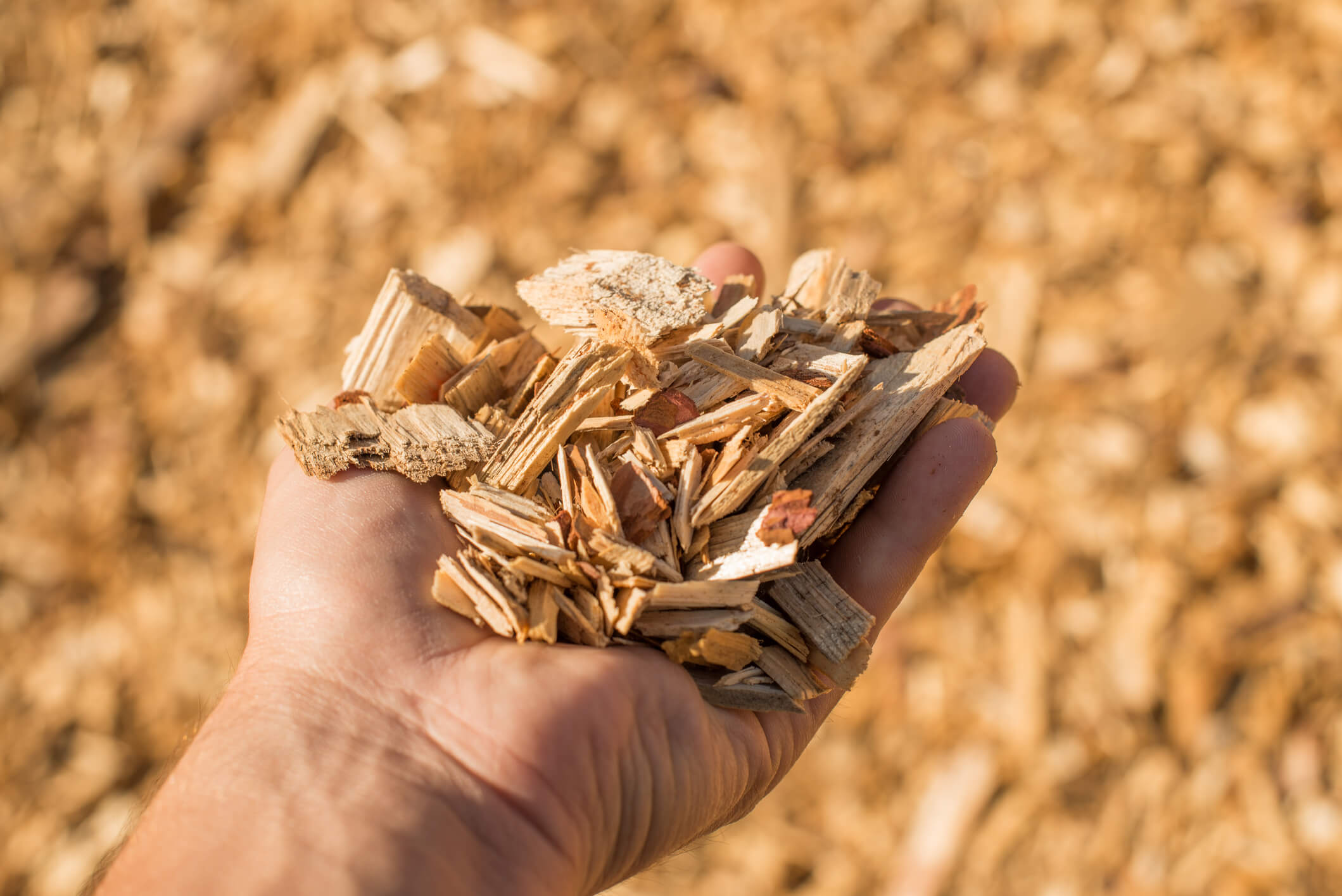 woody biomass to sustainable aviation fuels nwabf