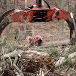 forest debris clearing NWABF